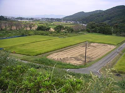 三ツ口池の田んぼ