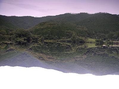 三ツ口池の凪いでいる水面
