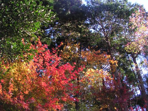 きれいな木の葉
