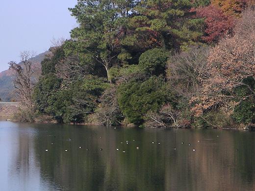 2008-1213_dee04.jpg