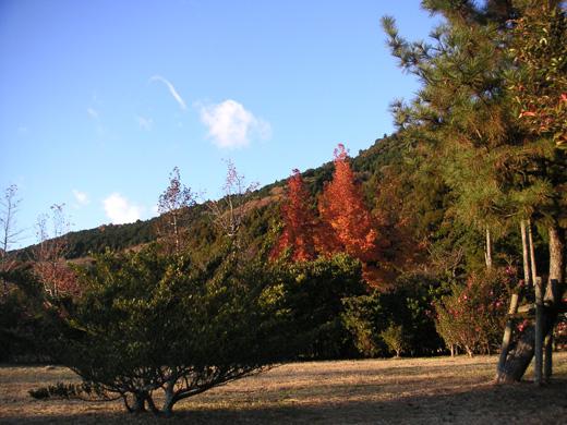 三ツ口池付近の木