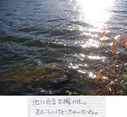 池に光る太陽の光と枯れ木