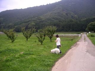ディーディーと梅の木
