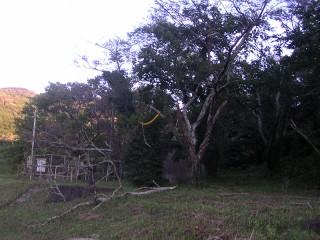 三ツ口池 倒木