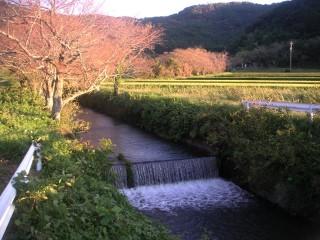 三ツ口池 西側の川