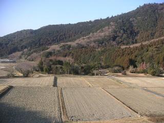 三ツ口池 西側の田んぼ