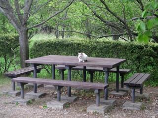 佐鳴湖公園 ネコ